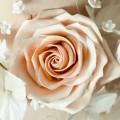 Blossom Tint